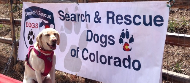 Search And Rescue Dog Training Schools Colorado
